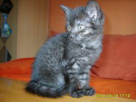 Katzenbabys 11 Wochen alt