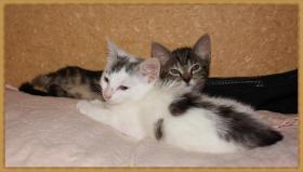 Foto 2 Katzenbabys in Not