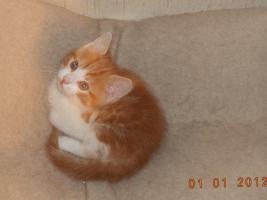 Foto 2 Katzenbabys zu Verkaufen