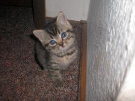 Foto 4 Katzenbabys suchen liebes zuhause