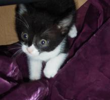 Foto 4 Katzenbabys zu verschenken !