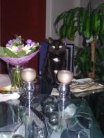 Foto 2 Katzenbetreuung