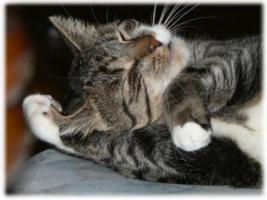 Katzenbetreuung für Wohnungskatzen in Dresden