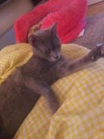 Katzenbetreuung auf Zeit * 2 süße Katzen