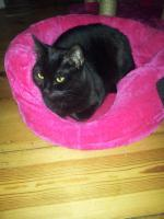 Foto 2 Katzenbetreuung auf Zeit * 2 süße Katzen