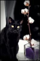 Katzendame gesucht :)