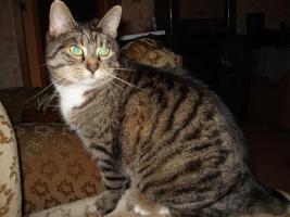 Foto 2 Katzendame sucht dringend neues Zuhause!