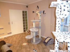 Foto 3 Katzenhotel Bonn 'wir haben noch Plätze frei in unserer Katzenpension!!!'