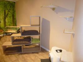 Foto 5 Katzenhotel Bonn 'wir haben noch Plätze frei in unserer Katzenpension!!!'