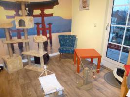Foto 8 Katzenhotel Bonn 'wir haben noch Plätze frei in unserer Katzenpension!!!'