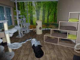 Foto 9 Katzenhotel Bonn 'wir haben noch Plätze frei in unserer Katzenpension!!!'