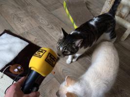 Katzenhotel Bonn ''wir haben noch Plätze frei in unserer Katzenpension!!!''