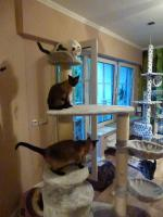 Foto 2 Katzenhotel Bonn ''wir haben noch Plätze frei in unserer Katzenpension!!!''