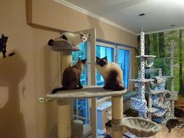 Foto 3 Katzenhotel Bonn ''wir haben noch Plätze frei in unserer Katzenpension!!!''