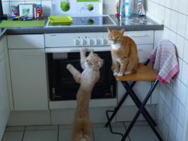 Foto 5 Katzenhotel Bonn ''wir haben noch Plätze frei in unserer Katzenpension!!!''