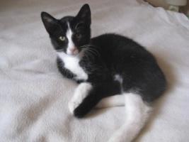 Foto 2 Katzenkind such neues Zuhause