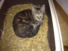 Foto 2 Katzenkinder