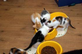 Foto 2 Katzenkinder in allen Farben abzugeben !!!!