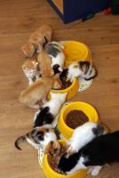 Foto 3 Katzenkinder in allen Farben abzugeben !!!!