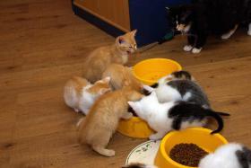 Foto 4 Katzenkinder in allen Farben abzugeben !!!!
