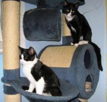 Foto 2 Katzenkinder suchen neuen Dosenöffner