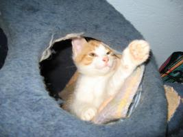 Foto 3 Katzenkinder suchen neuen Dosenöffner