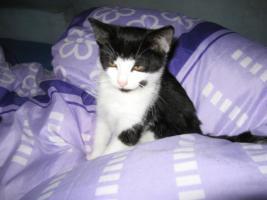 Foto 5 Katzenkinder suchen neuen Dosenöffner