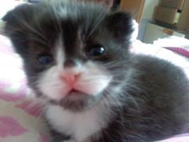 Foto 3 Katzenkinder zu verschenken