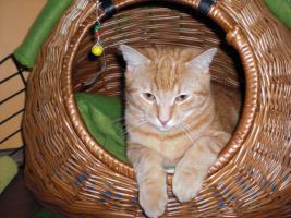 Katzenkörbchen / Höhle