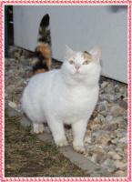 Foto 2 Katzenm�dls