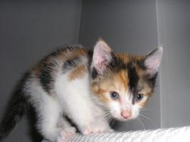 Foto 2 Katzenpflegestelle hat Katzen unterschiedl. Alters abzugeben