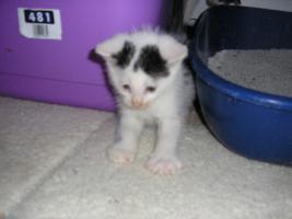 Foto 3 Katzenpflegestelle hat Katzen unterschiedl. Alters abzugeben
