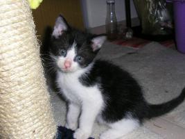 Foto 4 Katzenpflegestelle hat Katzen unterschiedl. Alters abzugeben