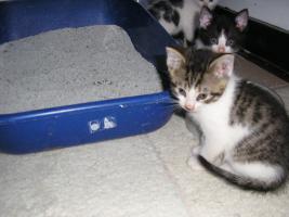Foto 5 Katzenpflegestelle hat Katzen unterschiedl. Alters abzugeben
