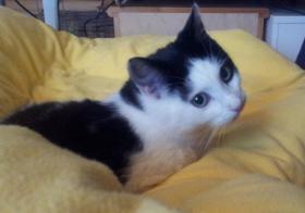 Foto 6 Katzenpflegestelle hat Katzen unterschiedl. Alters abzugeben