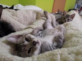 Katzenpflegestelle hat Katzen unterschiedlichen Alters abzugeben