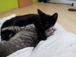 Foto 2 Katzenpflegestelle hat Katzen unterschiedlichen Alters abzugeben