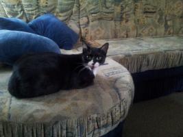 Foto 5 Katzenpflegestelle hat Katzen unterschiedlichen Alters abzugeben