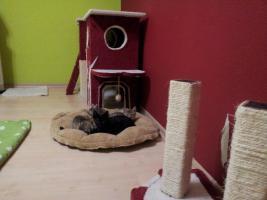 Foto 6 Katzenpflegestelle hat Katzen unterschiedlichen Alters abzugeben