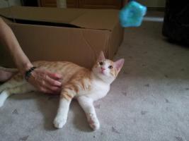 Foto 7 Katzenpflegestelle hat Katzen unterschiedlichen Alters abzugeben