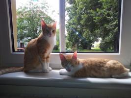 Foto 8 Katzenpflegestelle hat Katzen unterschiedlichen Alters abzugeben