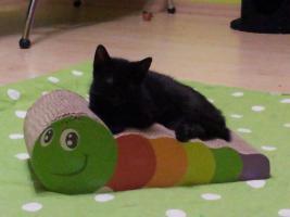 Foto 9 Katzenpflegestelle hat Katzen unterschiedlichen Alters abzugeben