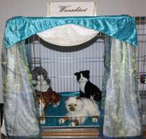 Foto 5 Katzenspieleparadies, Weihnachtsgewinnspiel, Rabattaktion, Neu