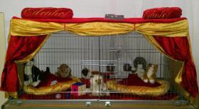 Foto 7 Katzenspieleparadies, Weihnachtsgewinnspiel, Rabattaktion, Neu