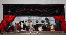 Foto 9 Katzenspieleparadies, Weihnachtsgewinnspiel, Rabattaktion, Neu