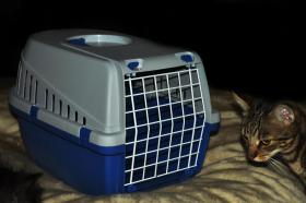 Katzentransportboxen