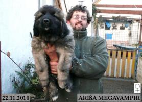 Foto 6 Kaukasischer Owtcharka Welpen mit FCI Papieren