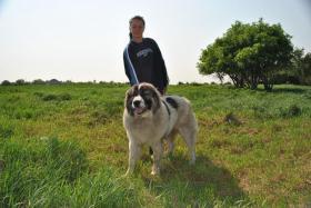 Foto 2 Kaukasischer Schäferhund