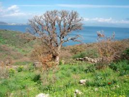 Kein Schnäppchen- aber etwas Besonderes/Griechenland