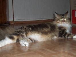 Kiki's mobile Katzen- und Kleintierbetreuung